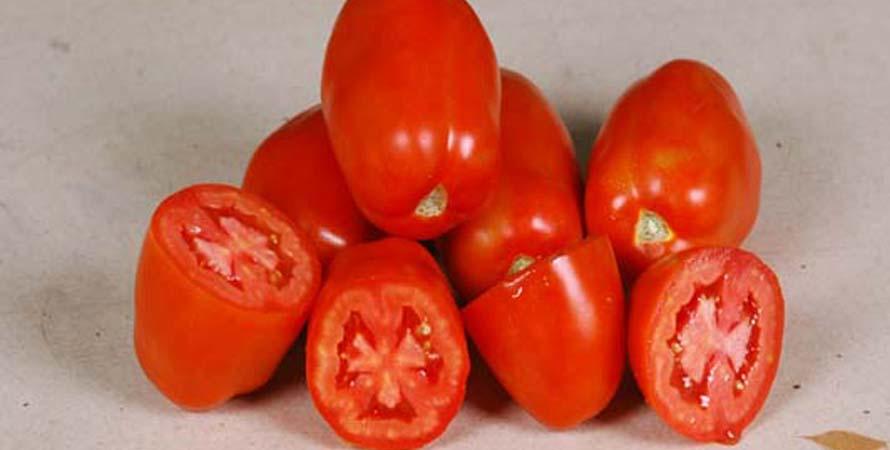 Hybrid Tomato Star